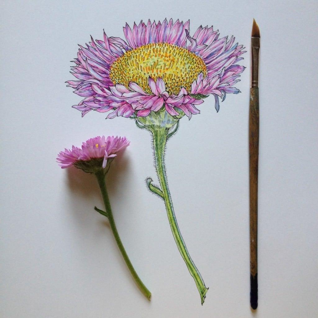 Flowers-in-Progress-A-beautiful-series-of-illustrations-by-Noel-Badges-Pugh-12-1024x1024