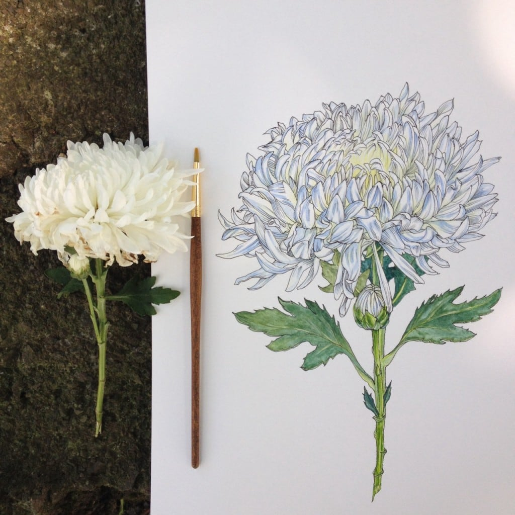 Flowers-in-Progress-A-beautiful-series-of-illustrations-by-Noel-Badges-Pugh-13-1024x1024
