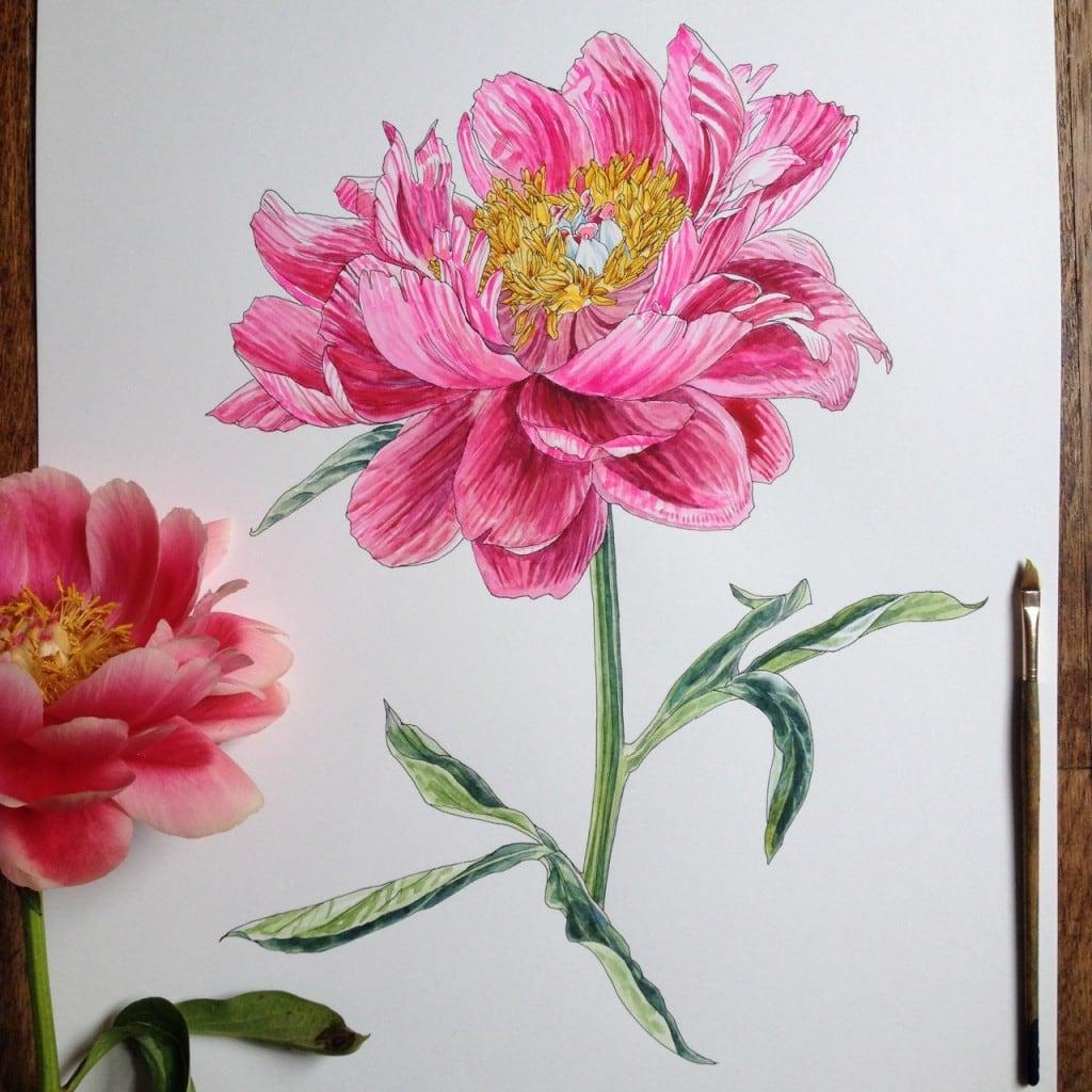Flowers-in-Progress-A-beautiful-series-of-illustrations-by-Noel-Badges-Pugh-14-1024x1024