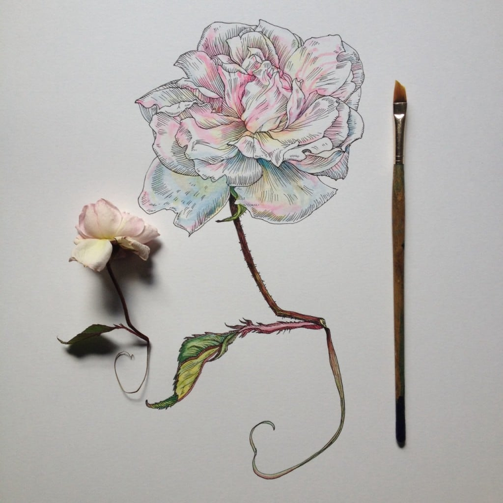 Flowers-in-Progress-A-beautiful-series-of-illustrations-by-Noel-Badges-Pugh-16-1024x1024