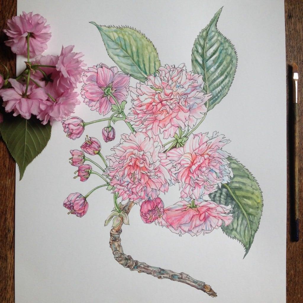 Flowers-in-Progress-A-beautiful-series-of-illustrations-by-Noel-Badges-Pugh-17-1024x1024