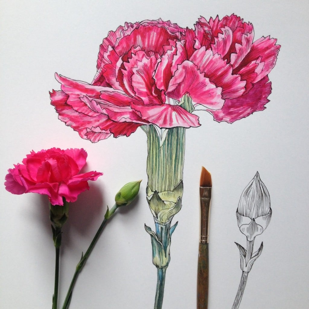 Flowers-in-Progress-A-beautiful-series-of-illustrations-by-Noel-Badges-Pugh-19-1024x1024
