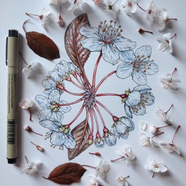 Flowers-in-Progress-A-beautiful-series-of-illustrations-by-Noel-Badges-Pugh-2-610x610