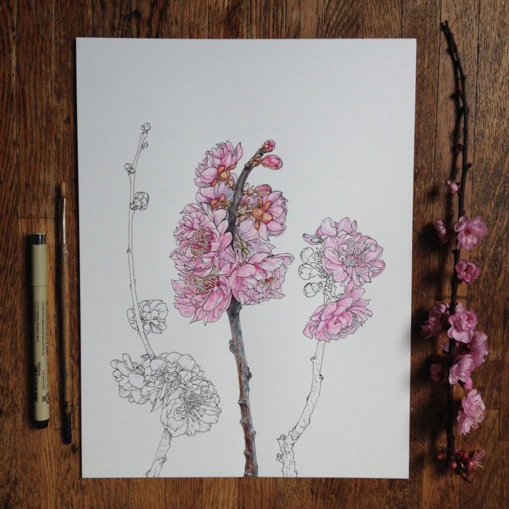 Flowers-in-Progress-A-beautiful-series-of-illustrations-by-Noel-Badges-Pugh-20-1024x1024