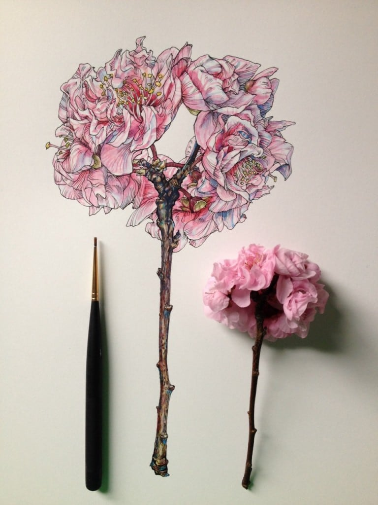 Flowers-in-Progress-A-beautiful-series-of-illustrations-by-Noel-Badges-Pugh-21-768x1024