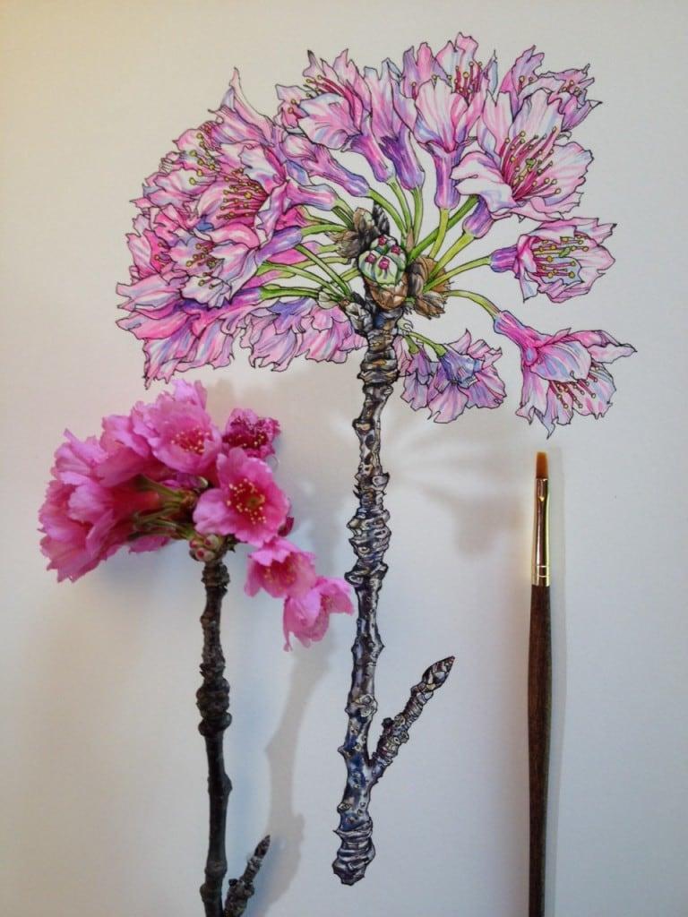 Flowers-in-Progress-A-beautiful-series-of-illustrations-by-Noel-Badges-Pugh-3-768x1024