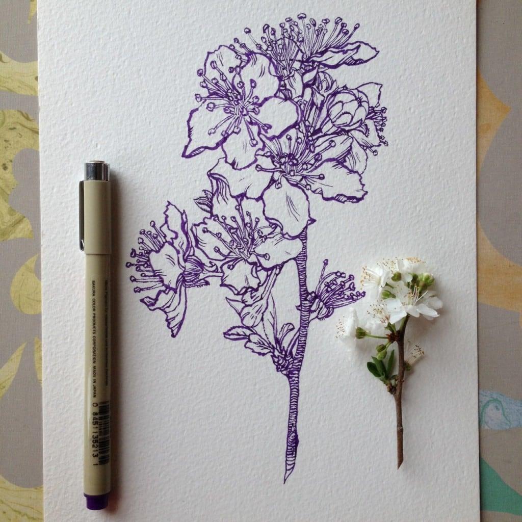 Flowers-in-Progress-A-beautiful-series-of-illustrations-by-Noel-Badges-Pugh-5-1024x1024