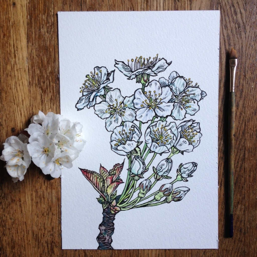 Flowers-in-Progress-A-beautiful-series-of-illustrations-by-Noel-Badges-Pugh-6-1024x1024