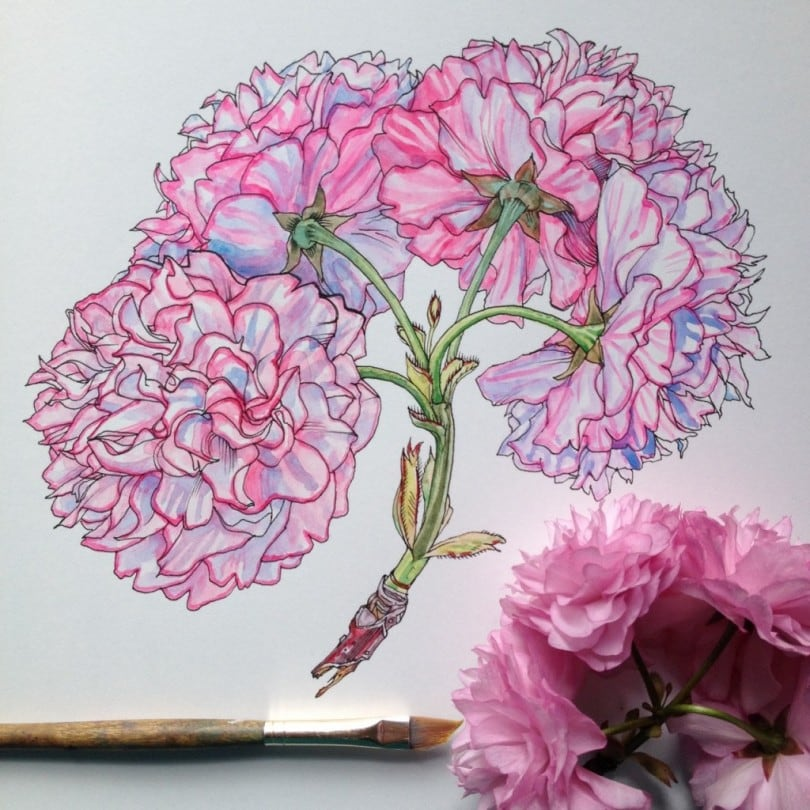 Flowers in Progress: A beautiful series of illustrations by Noel Badges Pugh 6