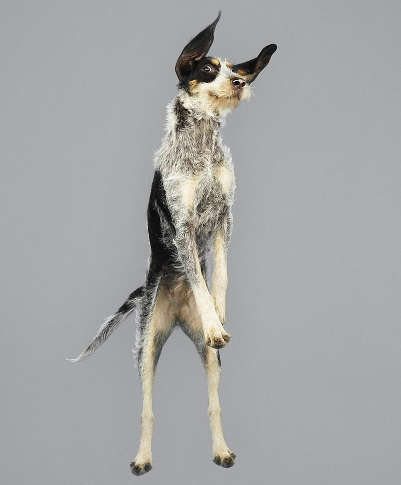 flyingdogs02