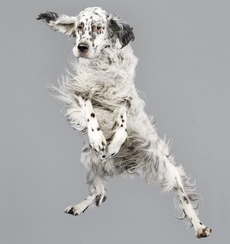 flyingdogs04