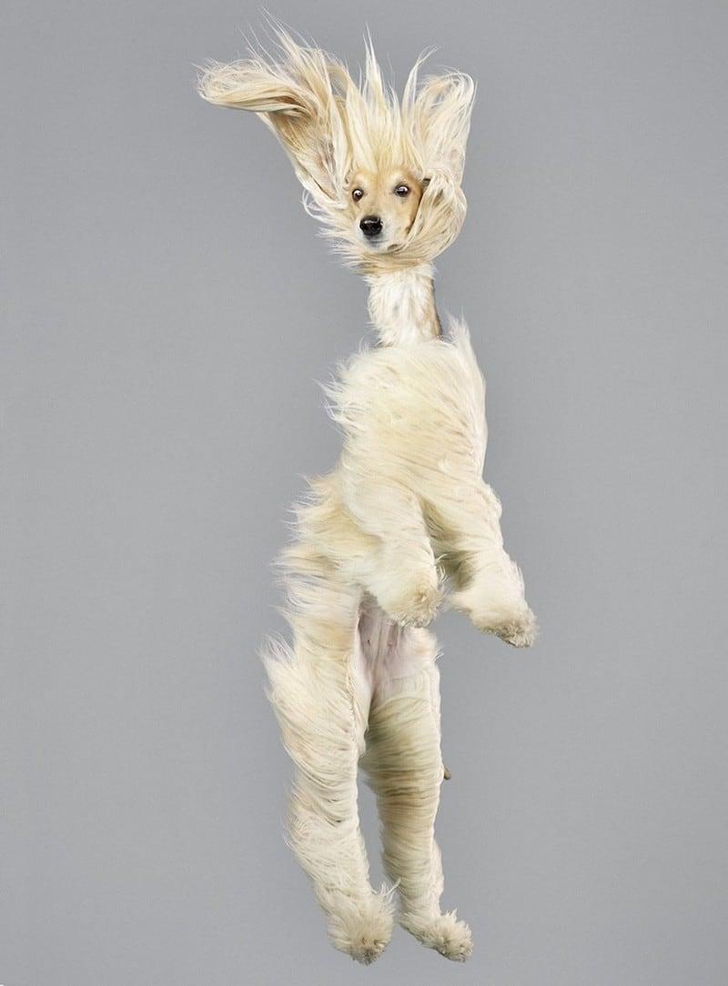 flyingdogs08