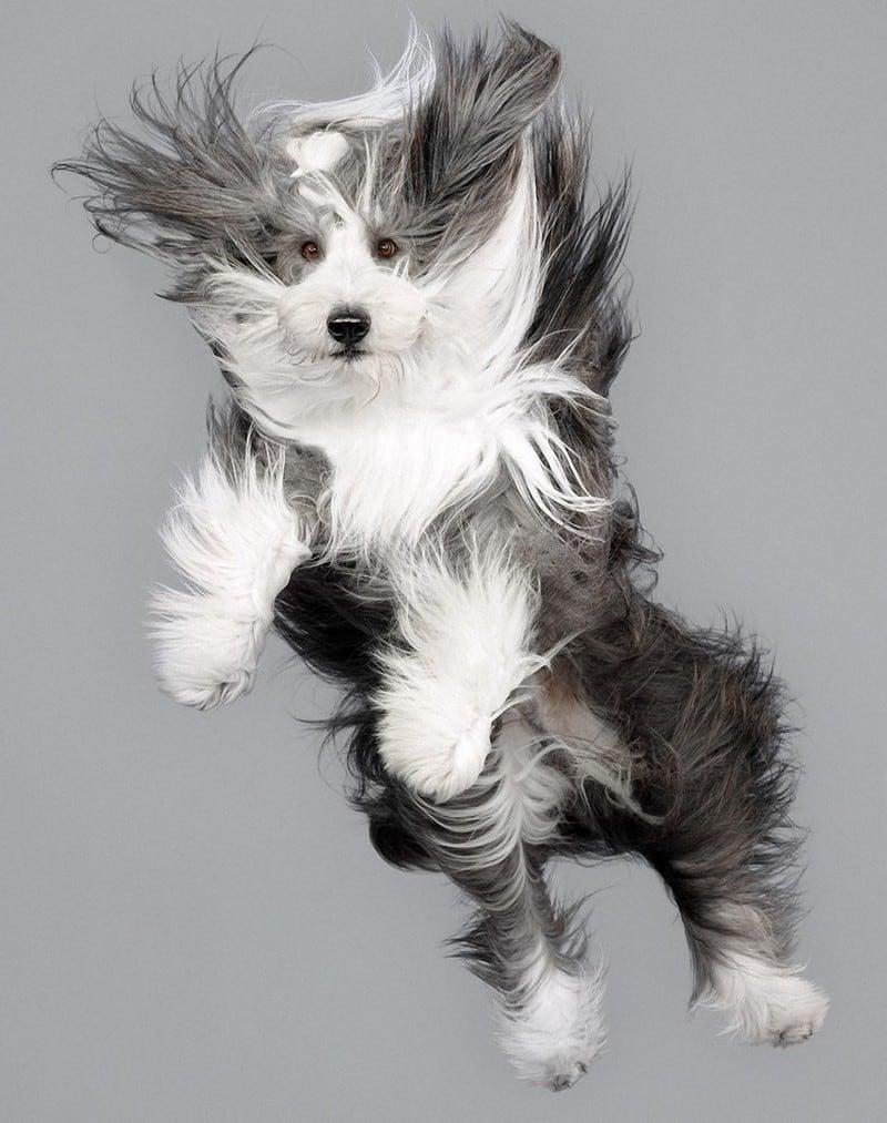 flyingdogs15