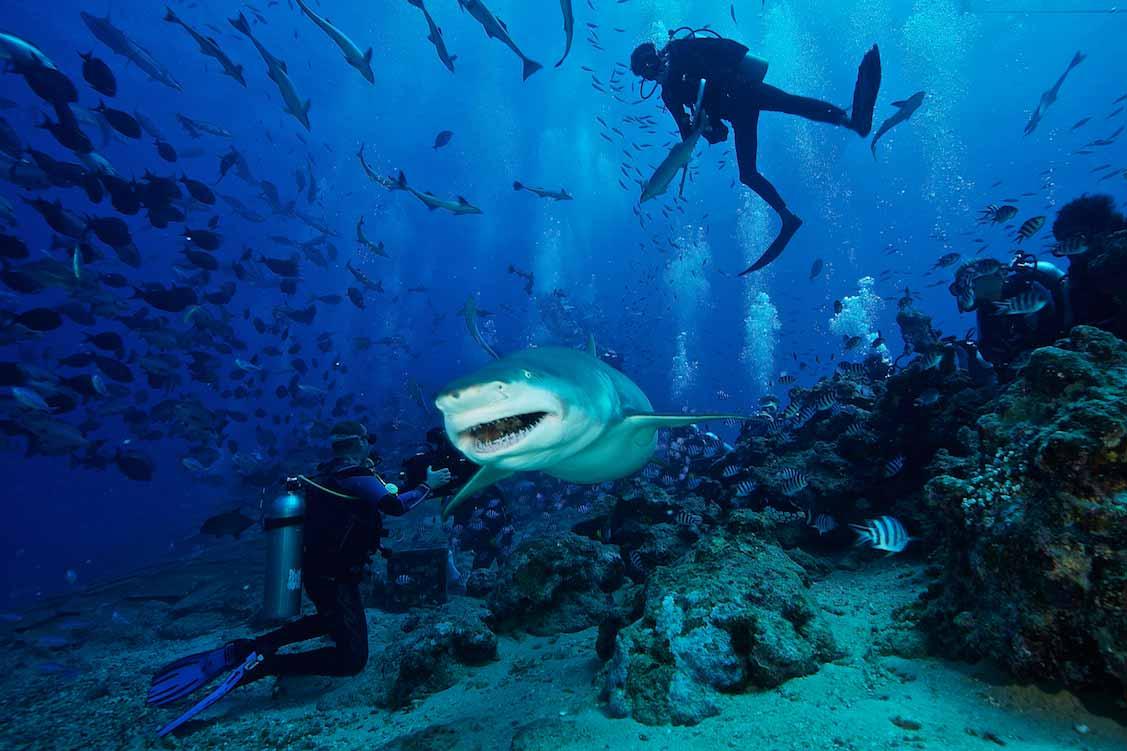 scuba diving Beqa Lagoon