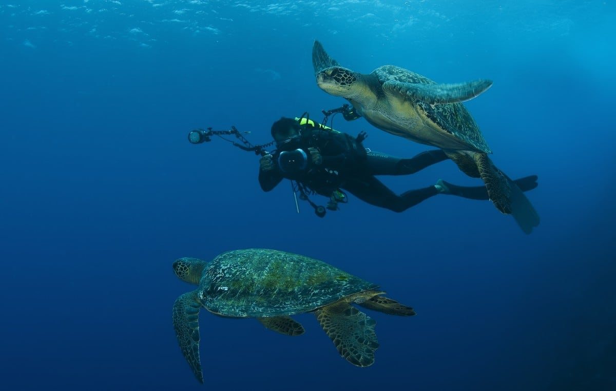 scuba diving Cocos Islands