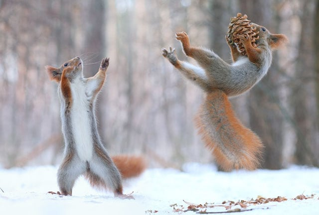 Cute-Squirrel-Photo-Shoot_10
