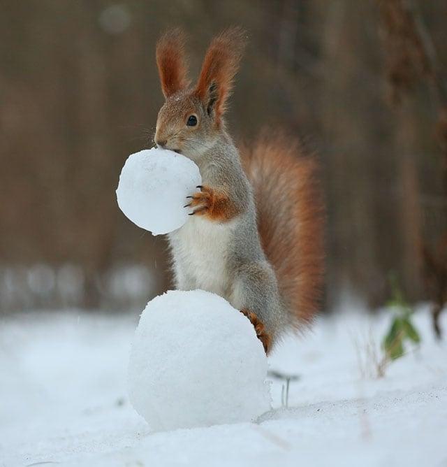 Cute-Squirrel-Photo-Shoot_3