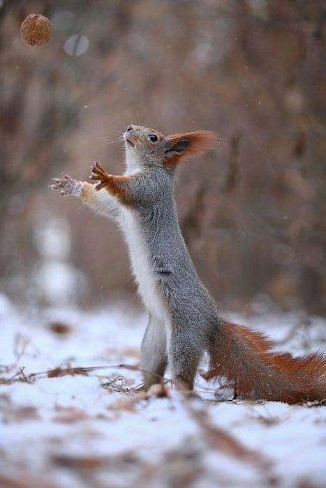 Cute-Squirrel-Photo-Shoot_4