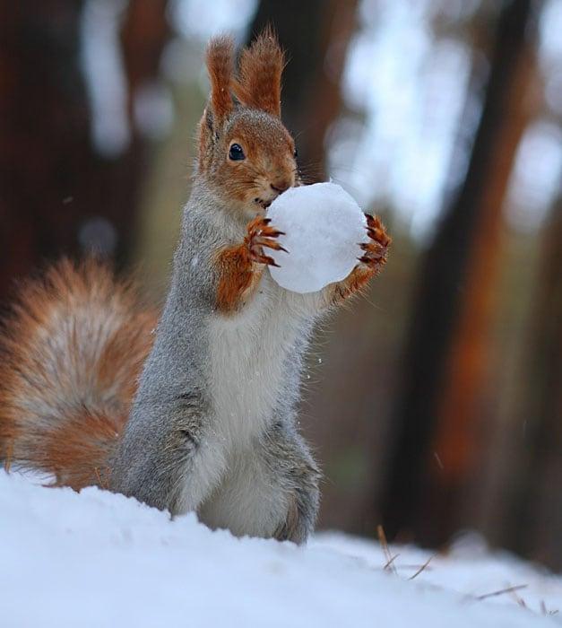Cute-Squirrel-Photo-Shoot_5