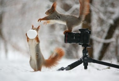 Photographer Vadim Trunov Captures a Cute Squirrel Photo-Shoot 7