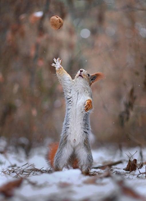 Cute-Squirrel-Photo-Shoot_7