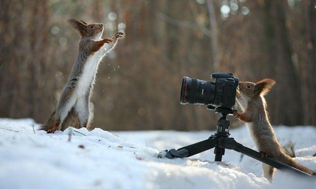 Cute-Squirrel-Photo-Shoot_8