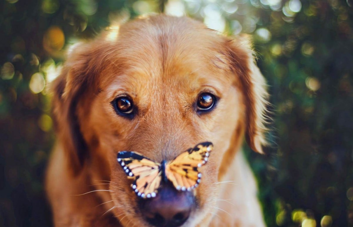 Most-Photogenic-Dog-1