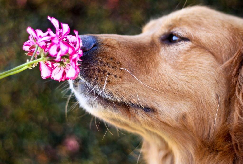 Most-Photogenic-Dog-11