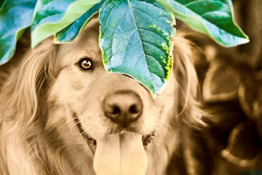 Most-Photogenic-Dog-12