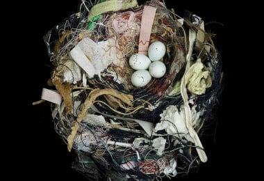 15 Stunning Photographs of Birds' Nests 5