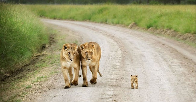 47 Animals Who Take This Whole Parenting Thing Very Seriously 11.jpg