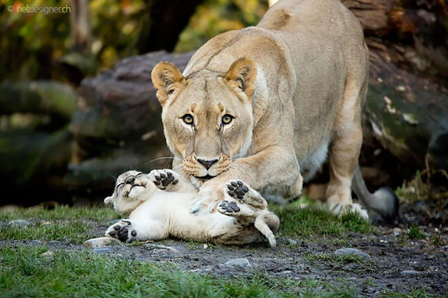 47 Animals Who Take This Whole Parenting Thing Very Seriously 15.jpg