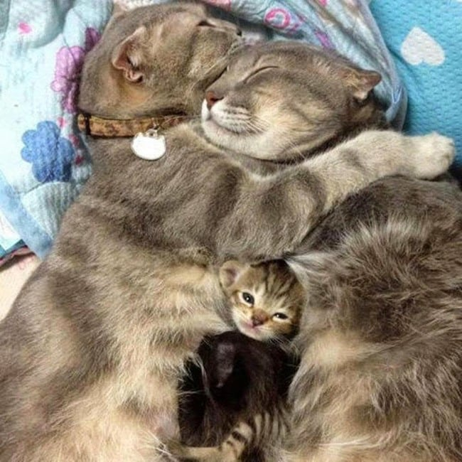 47 Animals Who Take This Whole Parenting Thing Very Seriously 35.jpg