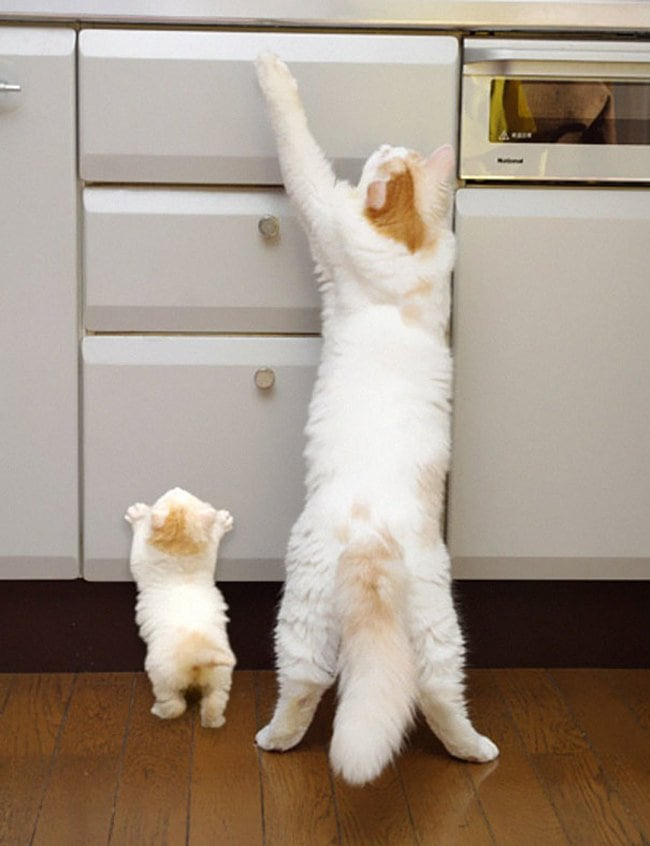 47 Animals Who Take This Whole Parenting Thing Very Seriously 37.jpg