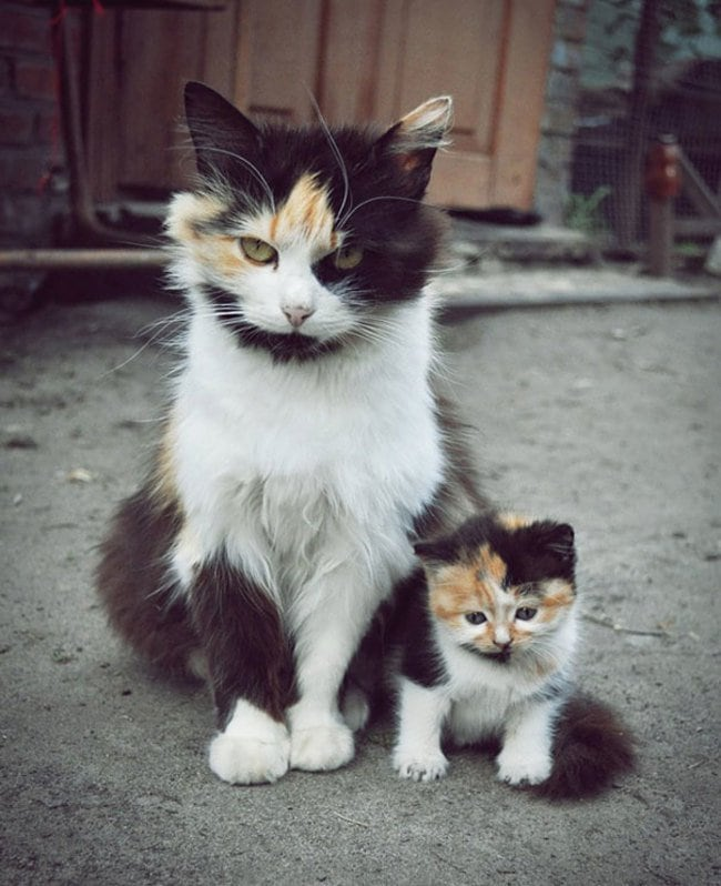 47 Animals Who Take This Whole Parenting Thing Very Seriously 40.jpg