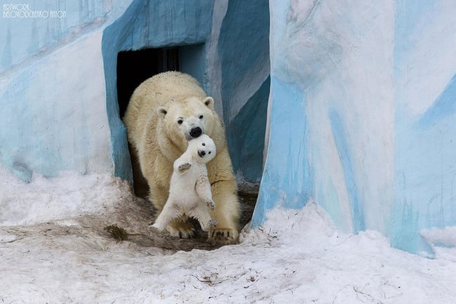 47 Animals Who Take This Whole Parenting Thing Very Seriously 44.jpg