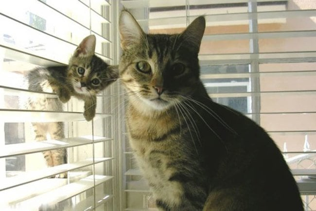 47 Animals Who Take This Whole Parenting Thing Very Seriously 46.jpg