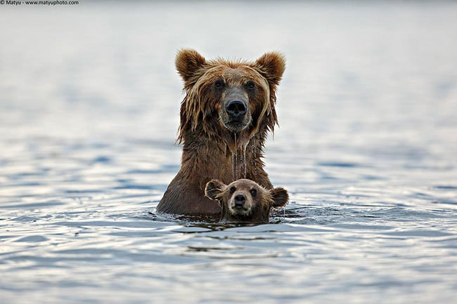 47 Animals Who Take This Whole Parenting Thing Very Seriously 5.jpg