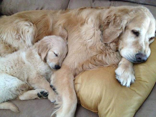 47 Animals Who Take This Whole Parenting Thing Very Seriously 9.jpg