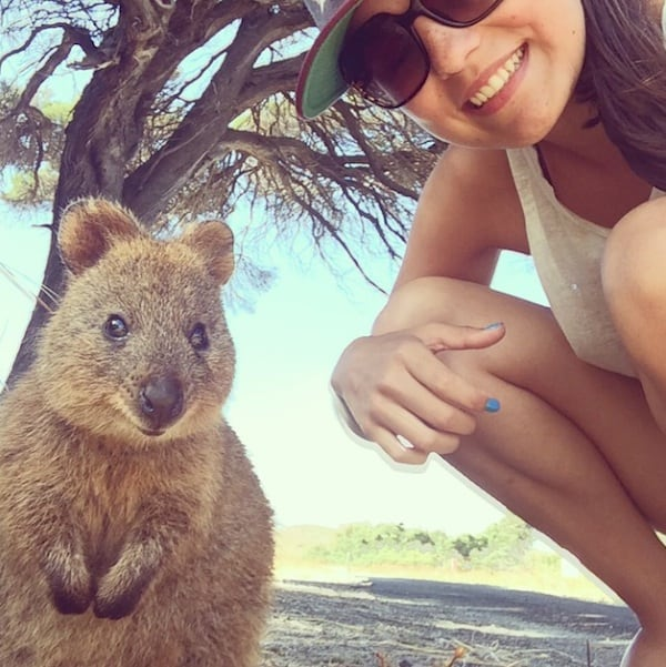 Quokka_Selfies_Meet_the_Worlds_happiest_Animal_on_Instagram_2015_02