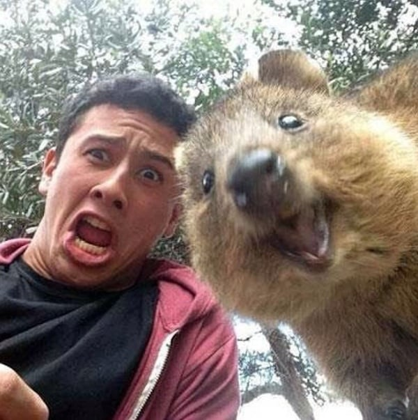 Quokka_Selfies_Meet_the_Worlds_happiest_Animal_on_Instagram_2015_03