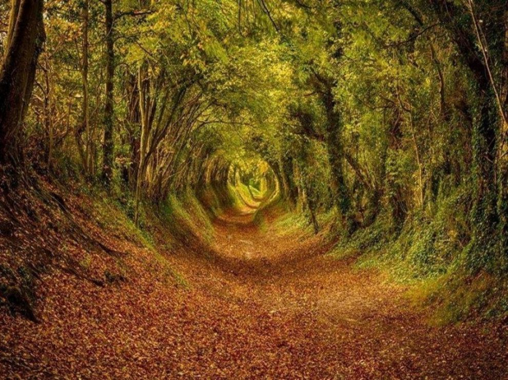 ashdown-forest-england