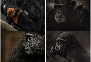 The Planet of the Apes by Steven Miljavac
