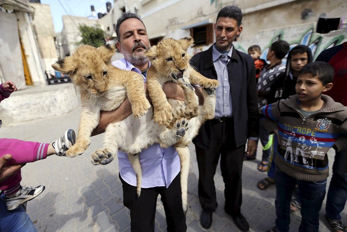 gaza-pet-lion-cubs-2