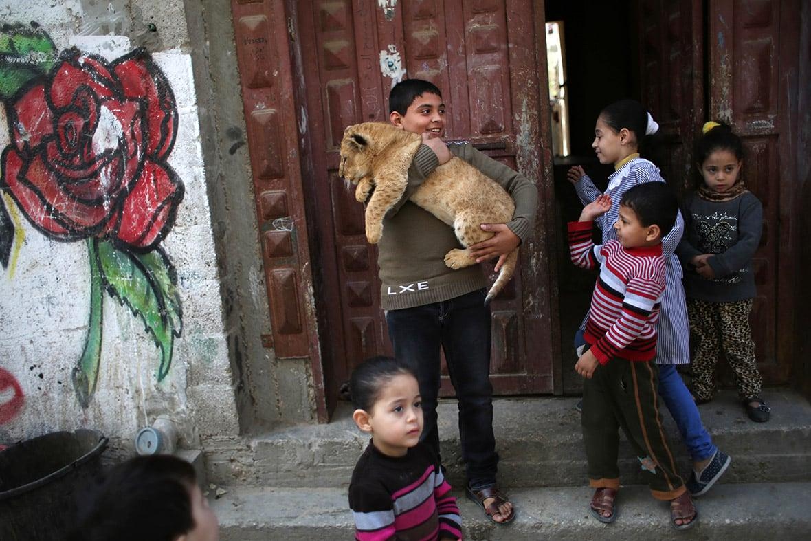 gaza-pet-lion-cubs-4