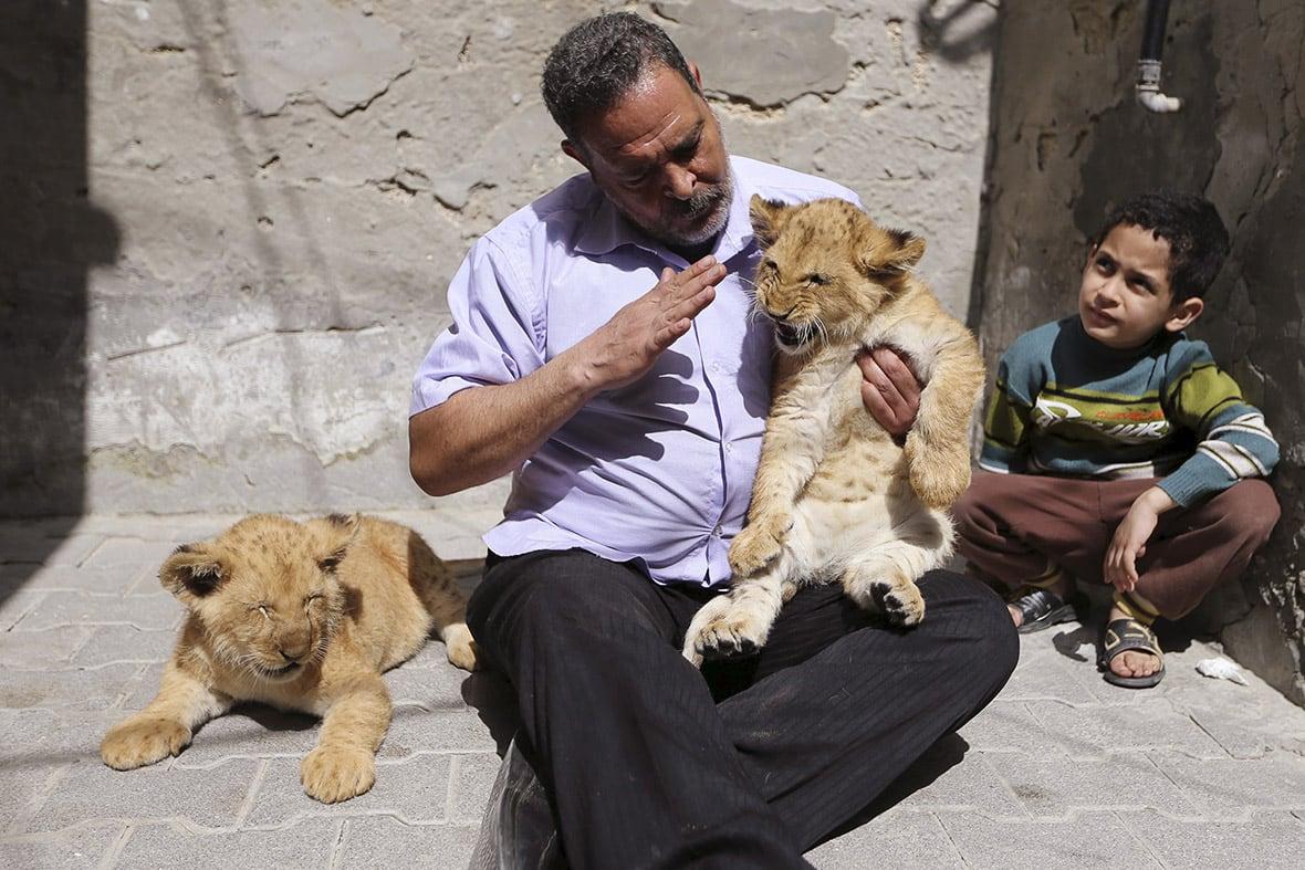 gaza-pet-lion-cubs-5