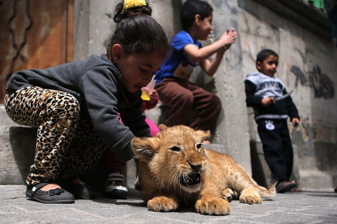 gaza-pet-lion-cubs-6