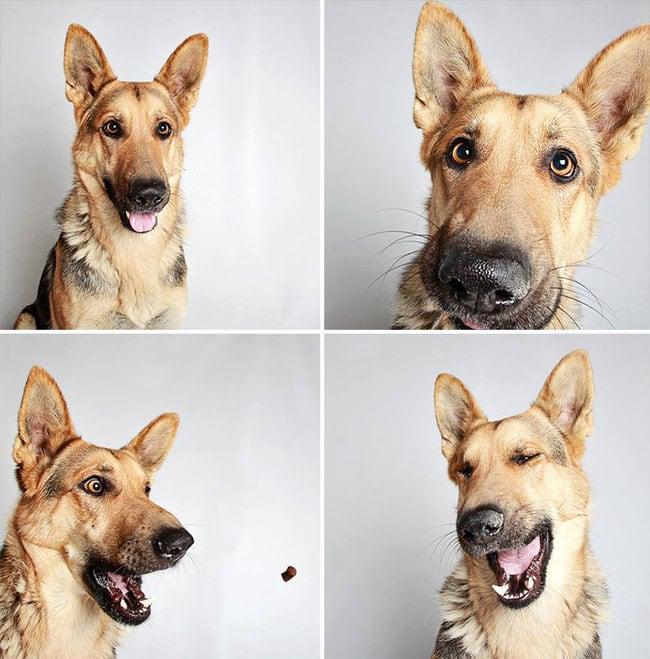 humane_utah_dog_quadruples_03