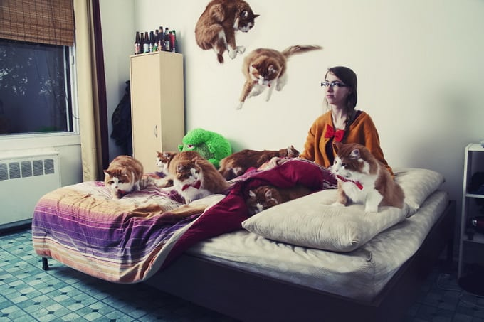 Photographer Andréanne Lupien's Amusing Surreal Series Of Crazy Cat Lovers 5