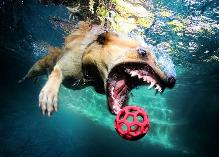 Seth-Casteel-Underwater-Dog-006